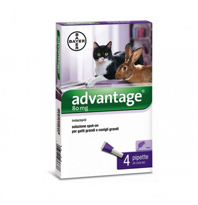 Bayer advantage spot-on 80 per gatti & conigli di peso superiore a 4 kg